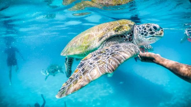 Nuotare con le tartarughe al Taaras, Redang