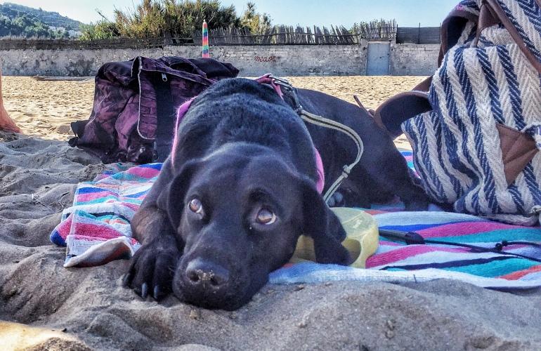 Come richiedere il passaporto per cani