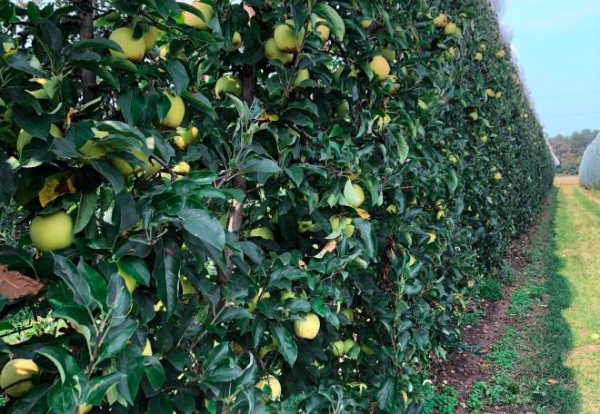 Attività con bambini: raccogliere la frutta