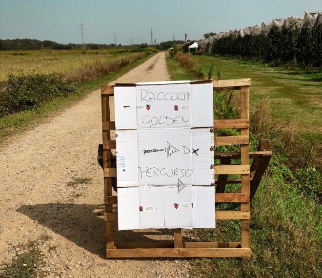 Dove andare per la raccolta della frutta in Lombardia