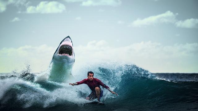 shark-3740292_640