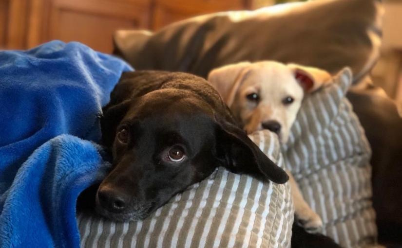 Cani e botti di Capodanno: qualche consiglio per affrontarli almeglio